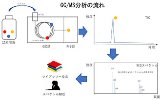 ガスクロマトグラフ質量分析計(GC/MS)の原理と特長